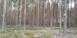 Koksnes tirgus apskats. 2020. gada rudens